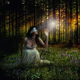 Seraphims Dream