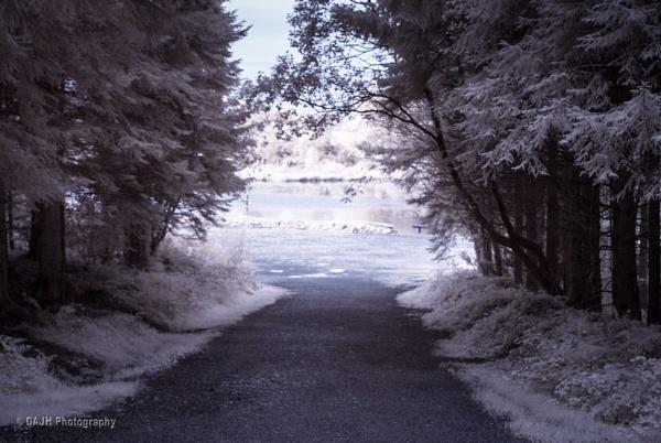 The lake at Gratloe Woods by jholmes