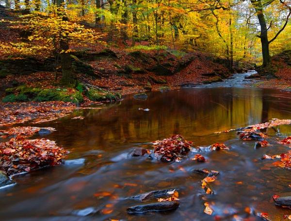 Autumns Intensity by JanieB43
