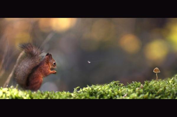 forestlife by maratsuikka