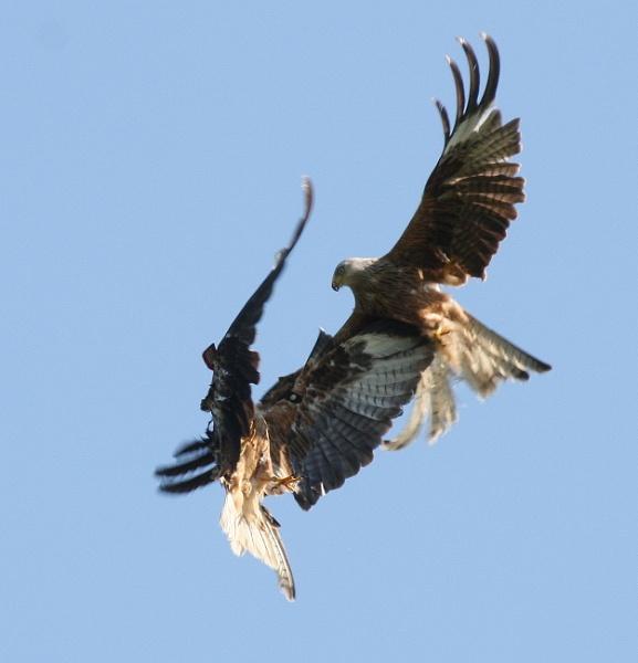 Aerial Combat by altosaxman