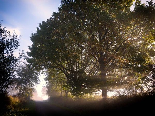 Tree of light by mlseawell