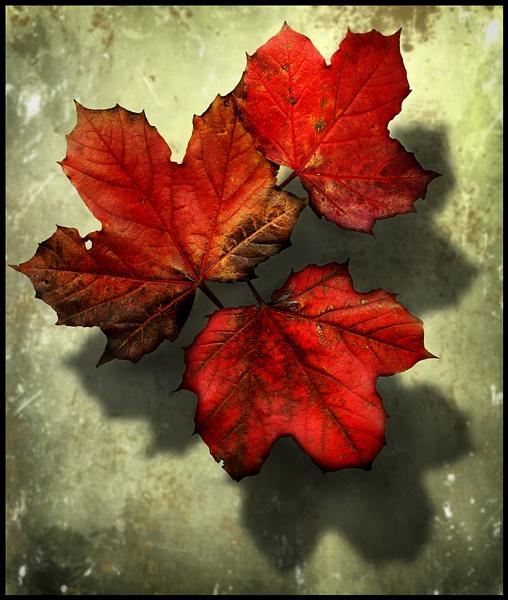 Autumn Tints. by Niknut