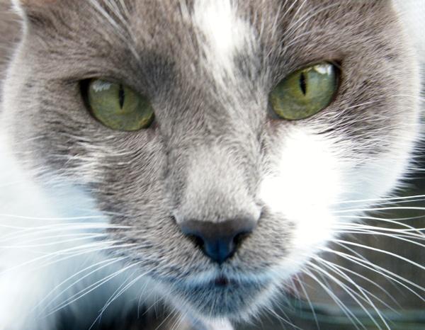 close up, cute cat! by Fruitcake