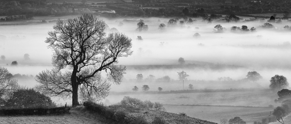 Misty morning in Glastonbury by janetm