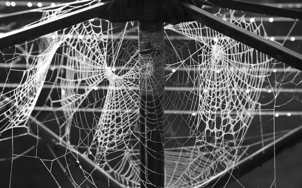 Misrty Morning Web by jembo
