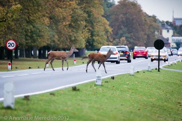 Deer Crossing by AMeredith