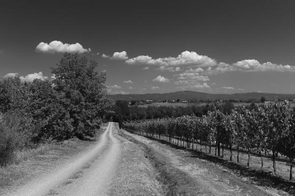 Tuscan landscape by celtxian