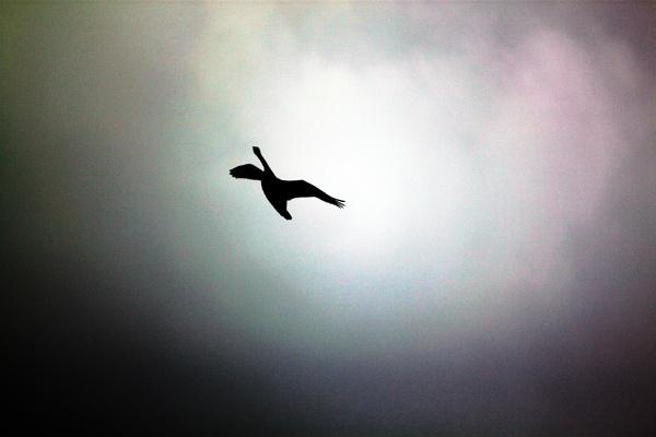 in flight by blkwolf007