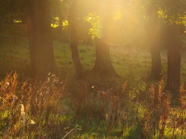 autumn evening by Fernowl