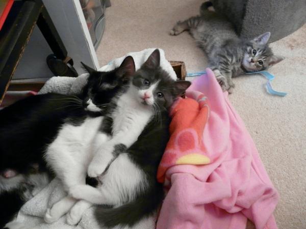 Mommy Cat Lucky and Girl Kitten Stockings by CatLover