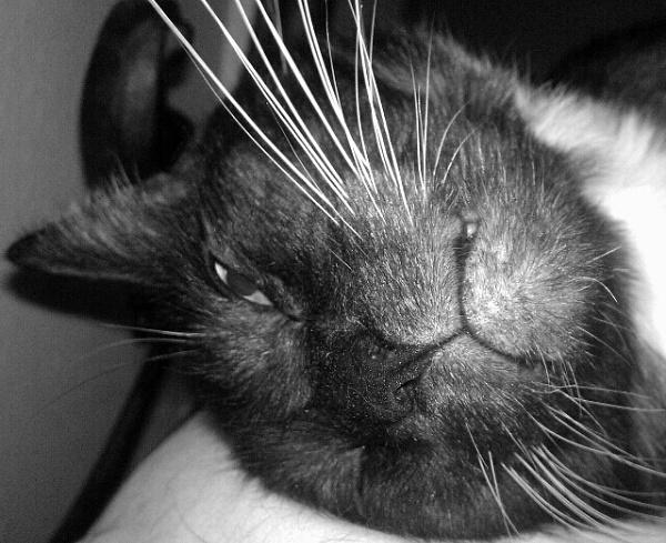 Meow by texaslady_40