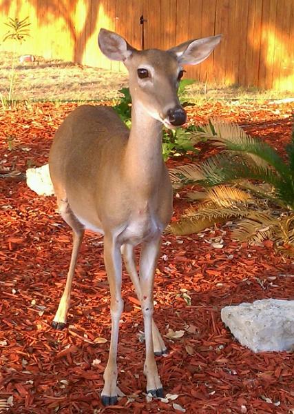 Dear Deer, so cute! by texaslady_40