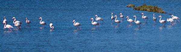March of the Flamingos by martin174