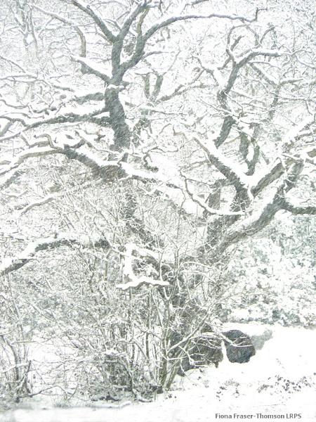 Snow-laden: a pencil sketch by zazzycat