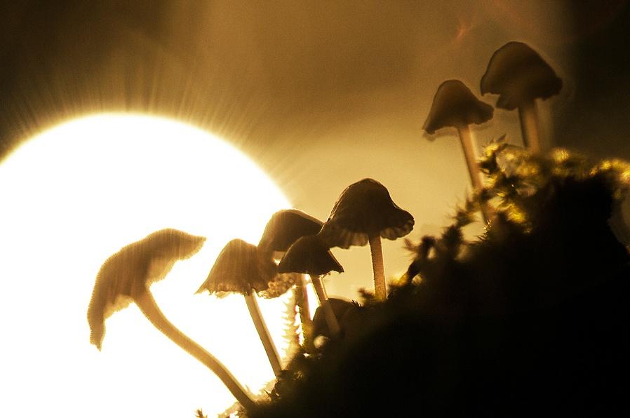 Autumn Shrooms