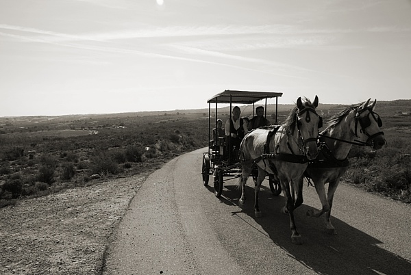 Horse Pilgrimage by Paddy_fox