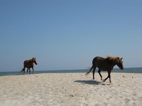 Horses by idz612