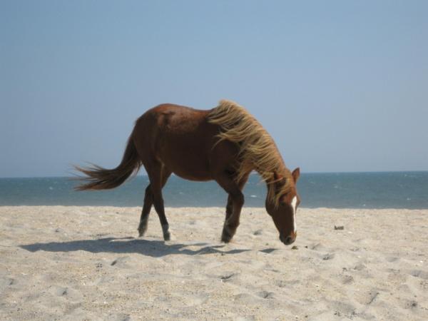 Horse by idz612