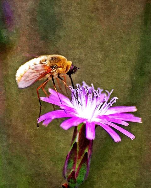 Bee on flower by wsteffey