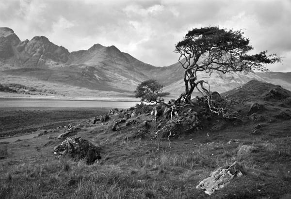Skye tree by wavey