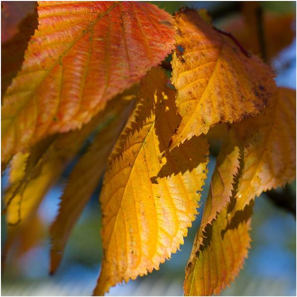 autumnal beginnings by JanieB43