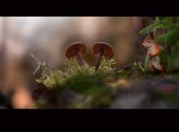 forestlife 2