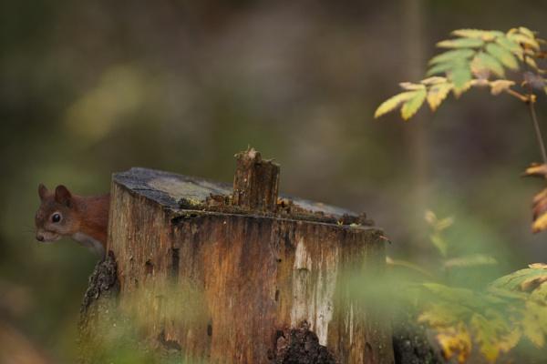 forestlife 4 by maratsuikka
