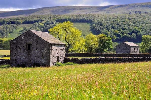 Summer meadow by DLLP