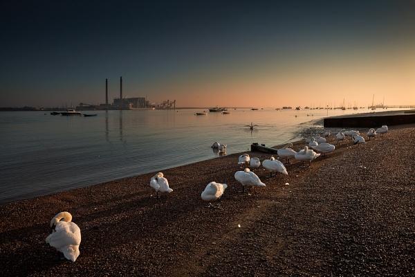 The Swans at Gravesend Prom. by derekhansen