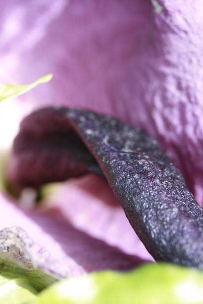 Dragon Plant by jimbob5643