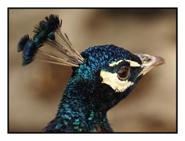 Natrual blue beauty