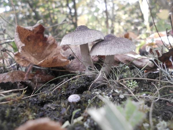 fungi by Andrea16