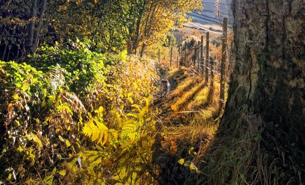 Lough Dan evening by paulcr