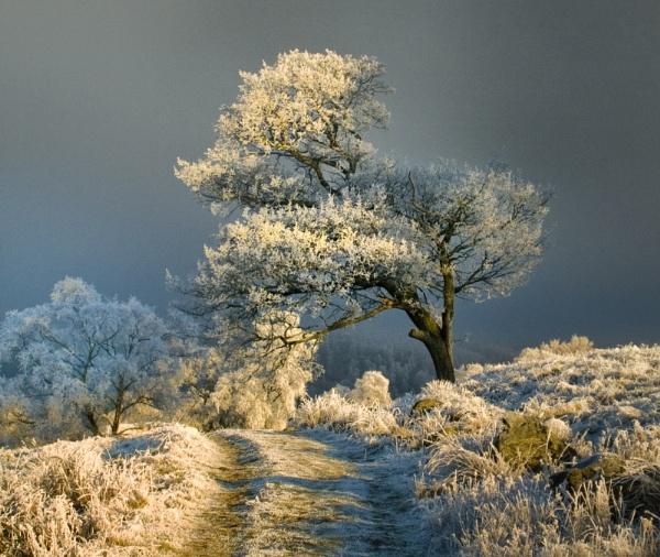 Hoare Frost Trees Dunkeld by jmcca