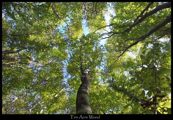 Ten Acre Wood by GavF