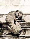 Fierce Creature by Scutter