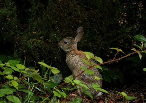 Rabbit by johnjones