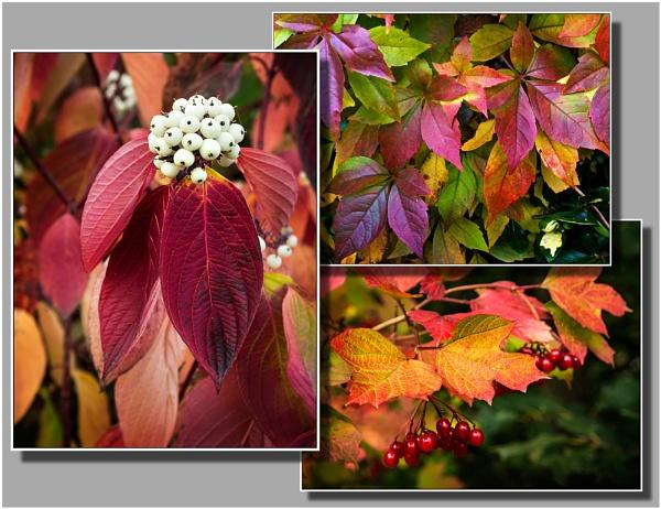 Autumn Variations. by Niknut
