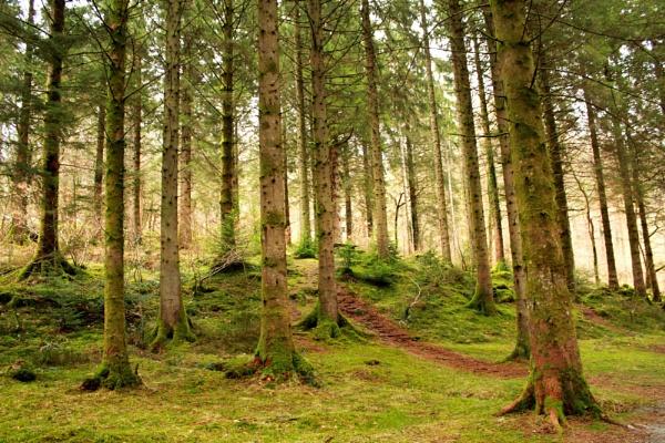 Forrest.. by bronwen1997