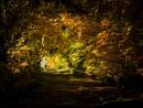 Woodland Walk by Ewanneil
