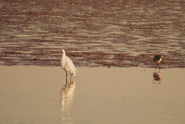 Early birds... by Chinga