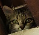 nosey kitten...