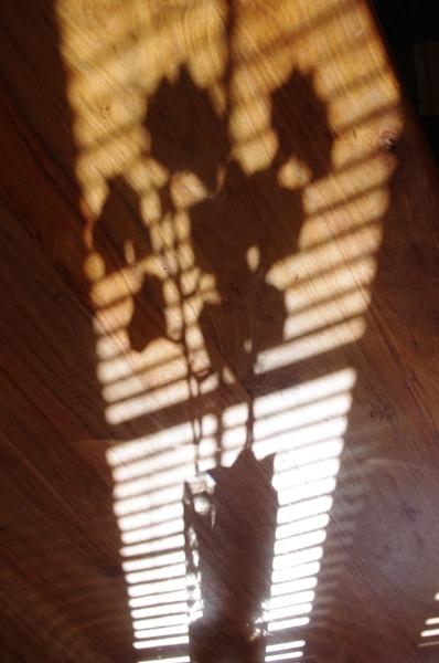 Shadows of Summer by tony64