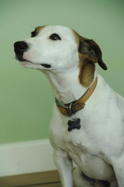 Doggie Portrait by AliceLuisePhotography