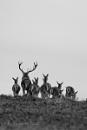 Red deer herd by AaronMarshallNichols