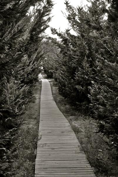 B&W Pathway. by wenzu78