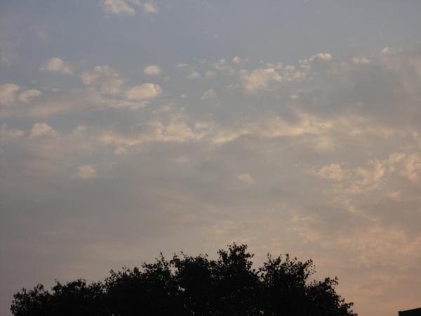 shady sun by bhavya3654
