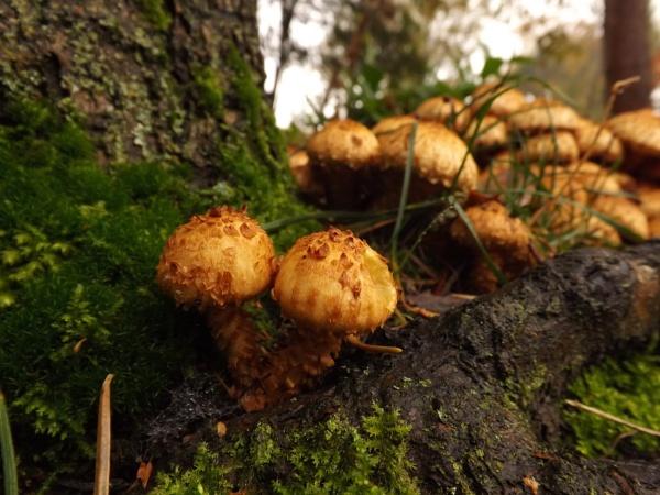 autumn fungi by Fernowl