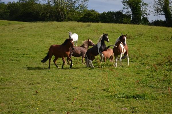 Meeting the Herd by Holmewood